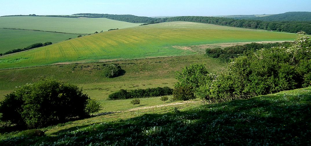Friston Forest, in the Wealden district of East Sussex